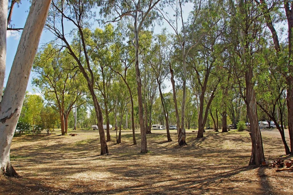 Campground Apex Park, Moura
